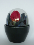 Flower Pot Red Tulip