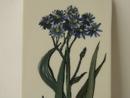 Seinälaatta sininen kukka